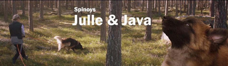 * * * * * * * * JULLE & JAVA  * * * * * * * *